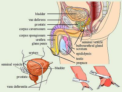 Frauen ejakulation info